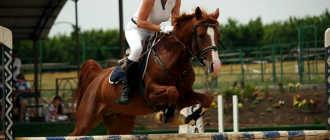 Прокат лошадей в �овочерка��ке