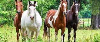 Серая в красную гречку, форелевая масть лошади: фото, оттенки, описание породы