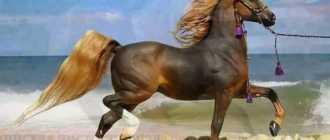 Доминантная масть лошади: редкая, отмастки, описание породы, фото