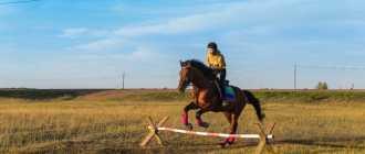 Прокат лошадей в Якутске