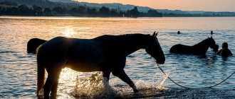 Тепловой (солнечный) удар у лошади: причины, профилактика, лечение
