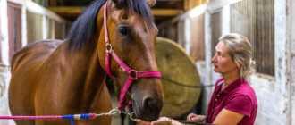 Прокат лошадей в Коломне