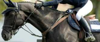 Обучение катанию на лошадях: подготовка, чистка, подседлание, посадка