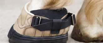Обувь для лошадей: башмаки, подковы, виды и колокольчики, фото