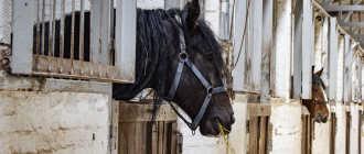 Прокат лошадей в Муроме