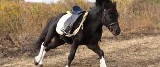 Одежда для лошади: уздечка, мартингал, седло, попона, фото