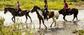 Прокат лошадей в Краснояре