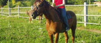Прокат лошадей в Перми