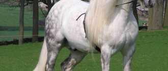 Китайская и Маньчжурская породы лошади: фото и видео, описание