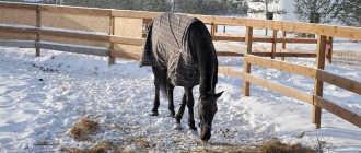 Прокат лошадей в Серпухове