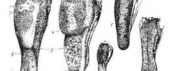 Строение ротовой полости лошади: рот, губы, щеки, десна, зев, язык, зубы, твердое и мягкое нёбо