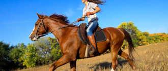 Прокат лошадей в Майкопе