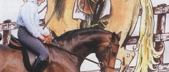 Обучение лошади: верховой езде, молодой, дикой, выездке и трюкам