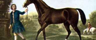 Самая знаменитая лошадь: в мифологии, современности, породы и фото