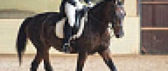 Прокат лошадей в Чебоксарах