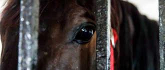 Прокат лошадей в Коврове