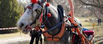 Как выбрать хомут для лошади, правила, фото и таблица замеров