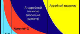 Сроки восстановления функциональных показателей мышц лошади: креатинфосфорная кислота, запас глюкозы