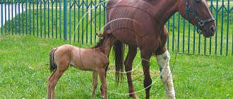 Строение задней конечности лошади: признаки и симптомы травмирования, травмы