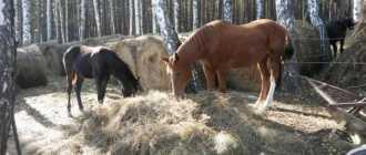 Прокат лошадей в Миассе