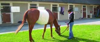 Колики у лошади: причины, что делать, лечение, желудочно-кишечный тракт, кормление