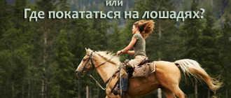 Прокат лошадей в Уфе