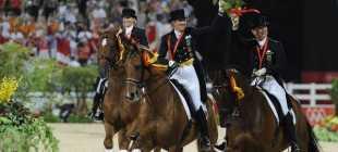 Шлезвингская порода лошадей, Schleswiger: фото, экстерьер и описание