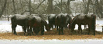 Зимнее снаряжение для лошади: попона, подковы, подкормка и фото