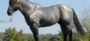 Гнедо-чалая масть лошадей: фото, описание, характеристики, ген