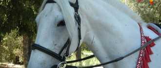 Прокат лошадей в Волгограде