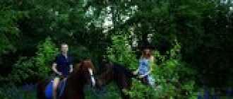 Прокат лошадей в Нижнем Новгороде