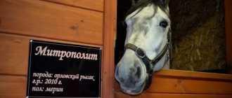 Красивые клички и имена для лошадей жеребцов: красивые и оригинальные, список по буквам