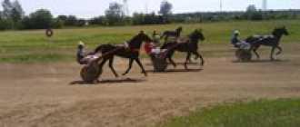 Прокат лошадей в Орле