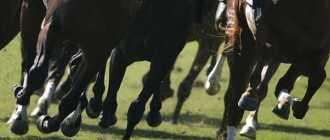 Строение копыта лошади: копытной кости, передние и задние, форма, размер