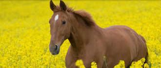 Дорожное снаряжение для лошади: мягкий валик, бандаж и попона