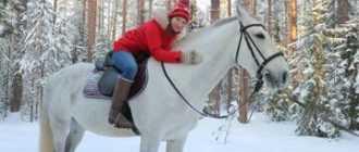 Прокат лошадей в Петрозаводске