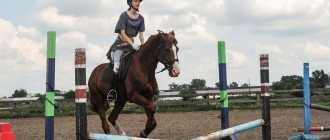 Прокат лошадей в Ангарске