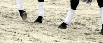 Бинты для ног лошади: флисовые, трикотажные, акриловые, шерстяные и эластичные