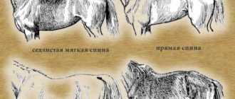 Части тела лошади: холка, спина, поясница, круп, грудная клетка, копыта, бабки и передние конечности