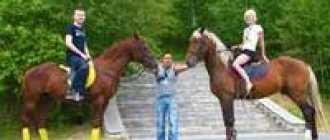 Прокат лошадей в Омске