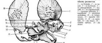 Строение кости лошади: костной ткани, развитие, классификация, фото